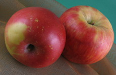 Photo of Apple Saute