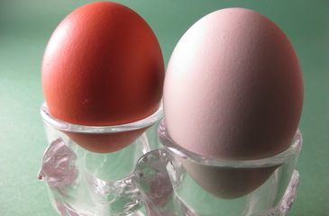 Photo of Hard Boiled Eggs